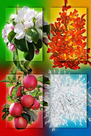 Collage of four pictures representing each season: spring, summer, autumn and winter.