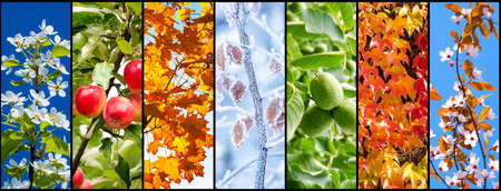 Collage of nature pictures representing seasons: spring, summer, autumn and winter.