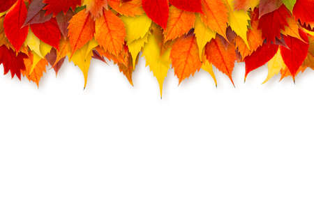 Colorful autumn leaves border isolated on white background.