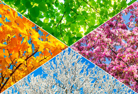 Collage of four tree pictures representing each season: spring, summer, autumn and winter. Stock Photo