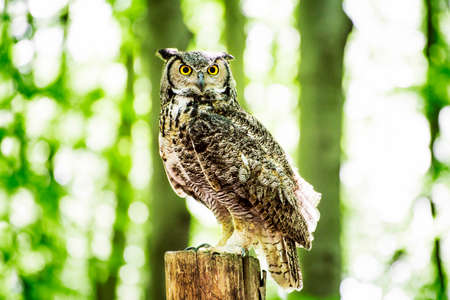 Owl sitting on the stump in the sunny forest.