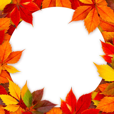 Blank round card surrounded by colorful autumn leaves. Stock Photo