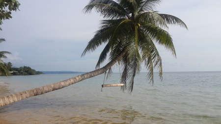 white sand: white sand beach