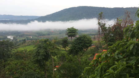 picket green: green and foggy fresh morning in the mountain, Thailand