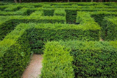 Yew maze in a park