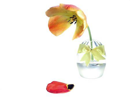 Orange - tulp in bloempot Stockfoto - 554039