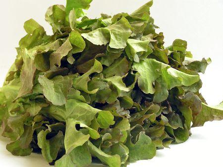 lettuces: different lettuces change