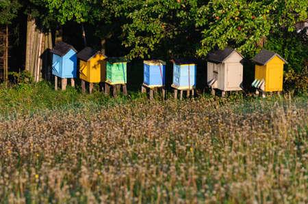 hives: hives