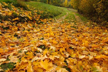 golden: golden leaves