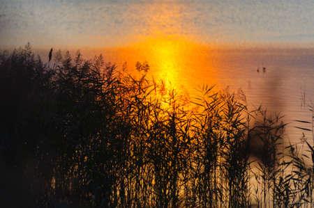 lake shore: Grass on lake shore at sunset.