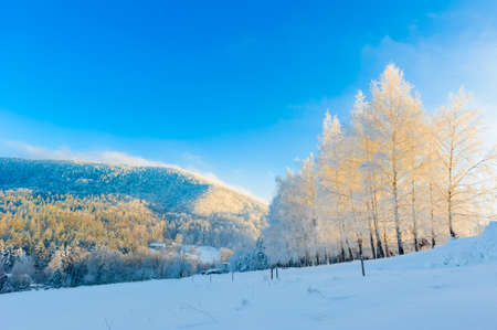 Landscape with trees covered by fresh snow on golden hour