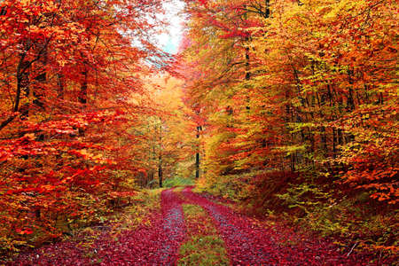 Colourful autumn forest road in October 免版税图像