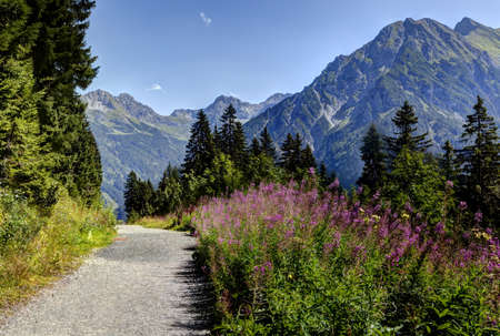 Away in the mountains, in summer, to flowers and forest past Stock Photo
