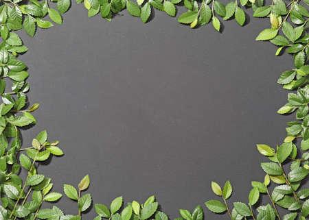 Chalkboard framed in slate effect of elm branches