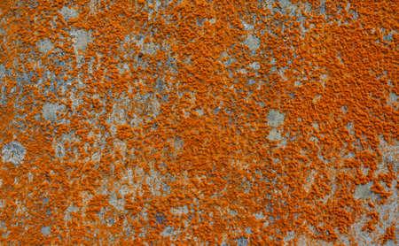 colonization: Lichen on concrete surface