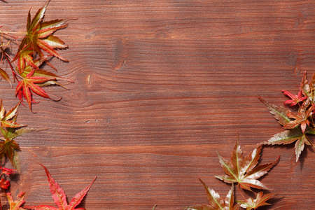 Wooden board with frame of Japanese maple leaves  photo