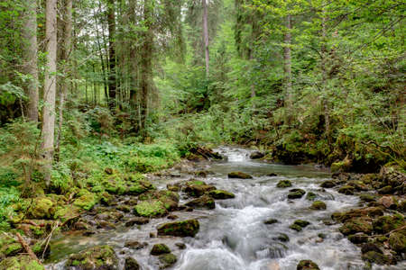 fluent: Wild mountain river in a valley, surrounded by forest. In the Alps, in summer.