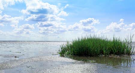 watt: Watt on the North Sea, with watt Grass, Horizon and blue sky and clouds.