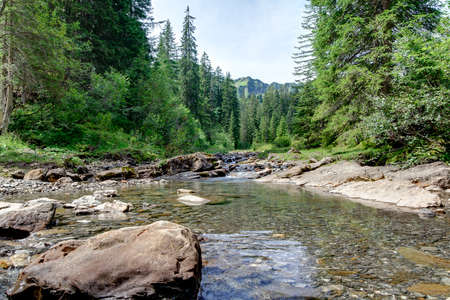 Mountain stream surrounded by coniferous forest. In the Alps, in summer. In the frog perspective. Stock Photo