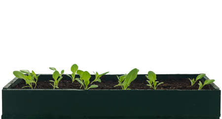 Cultivation bowl with lettuce plants in soil.