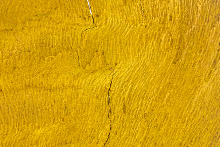 Bark with gold color and structure lines. 免版税图像