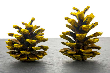 Two pine cones golden on dark stone plate and white background. 免版税图像