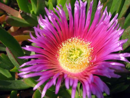 summer flower Stock Photo - 945588