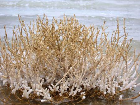 hydrochloric: Dead sea