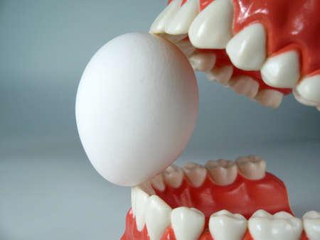 teeth model,plastic dental teeth model ,chattering teeth,mold of a full set of human teeth photo