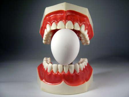 plastic dental teeth model  photo