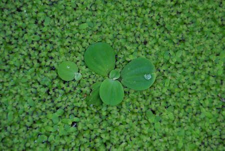 green grass and drop on leaf Stock Photo - 2471230