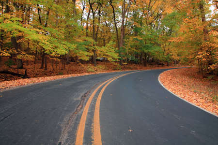 gait: autumn forest road, leavs are falling on the road