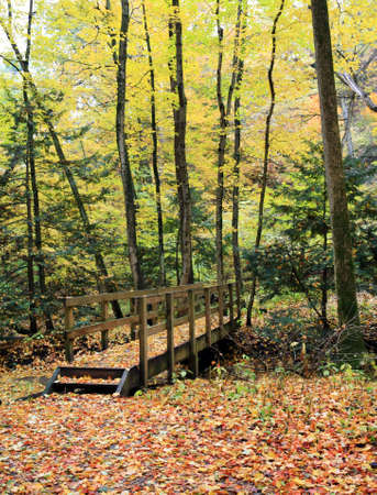 gait: autumn forest day time image variation of colors Stock Photo