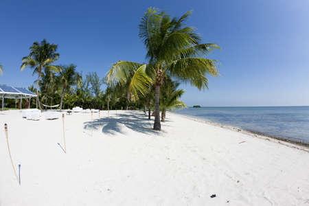 Florida palm tree on the beach and a blue sky photo