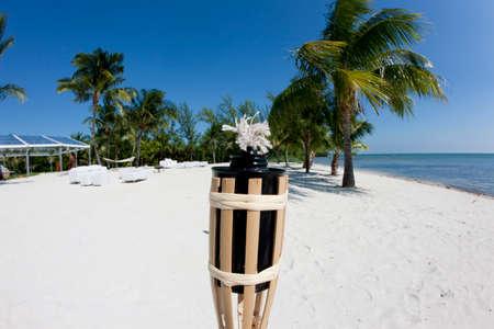 Florida palm tree on the beach and a blue sky