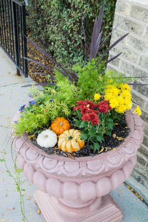 outumn: flower pot in the garden with pumpkins