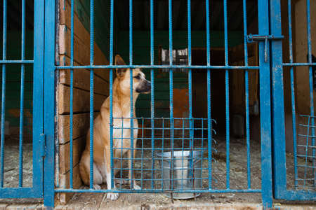 Cage with a dog in an animal shelter