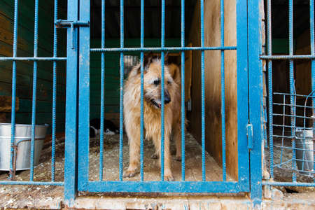 Cage with dogs in animal shelter Stock Photo
