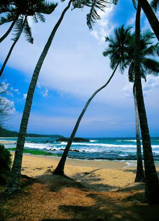 Empty Sand Beach With Palms, Sri Lanka photo