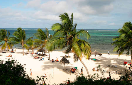 tropical beach with white sand and palm trees photo