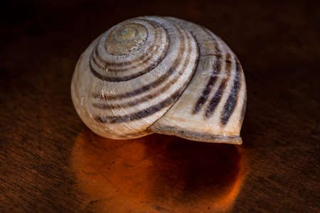 aquatic Shell in close-up