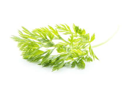 fresh organic parsley isolated on white background