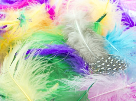 pile of colorful feathers as background photo