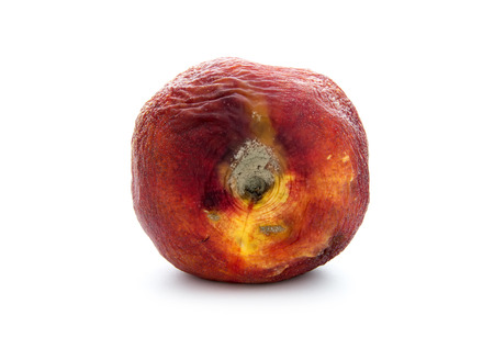 rotten old nectarine with mildew isolated on white