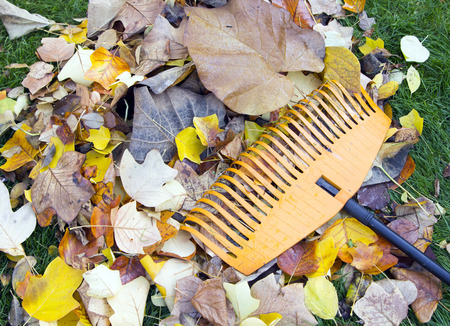 pile of autumn leaves with rake