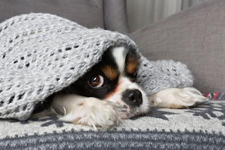 schattige hond onder de warme grijze deken