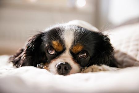 taking nap: cute dog taking a nap Stock Photo