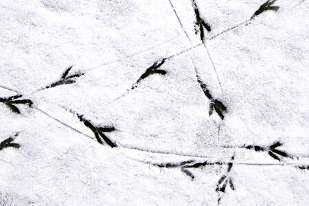 bird footprints on the snow Stock Photo
