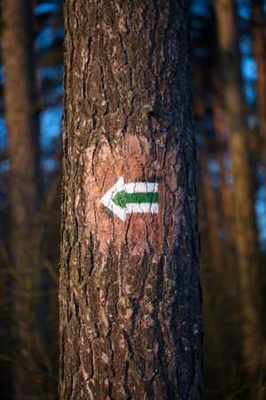 Green arrow on the tree - tourist trail indication