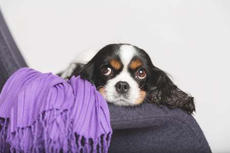 Cute dog leans head on the armchair Stock Photo